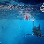Ronnie Fields, Chasing Marlin