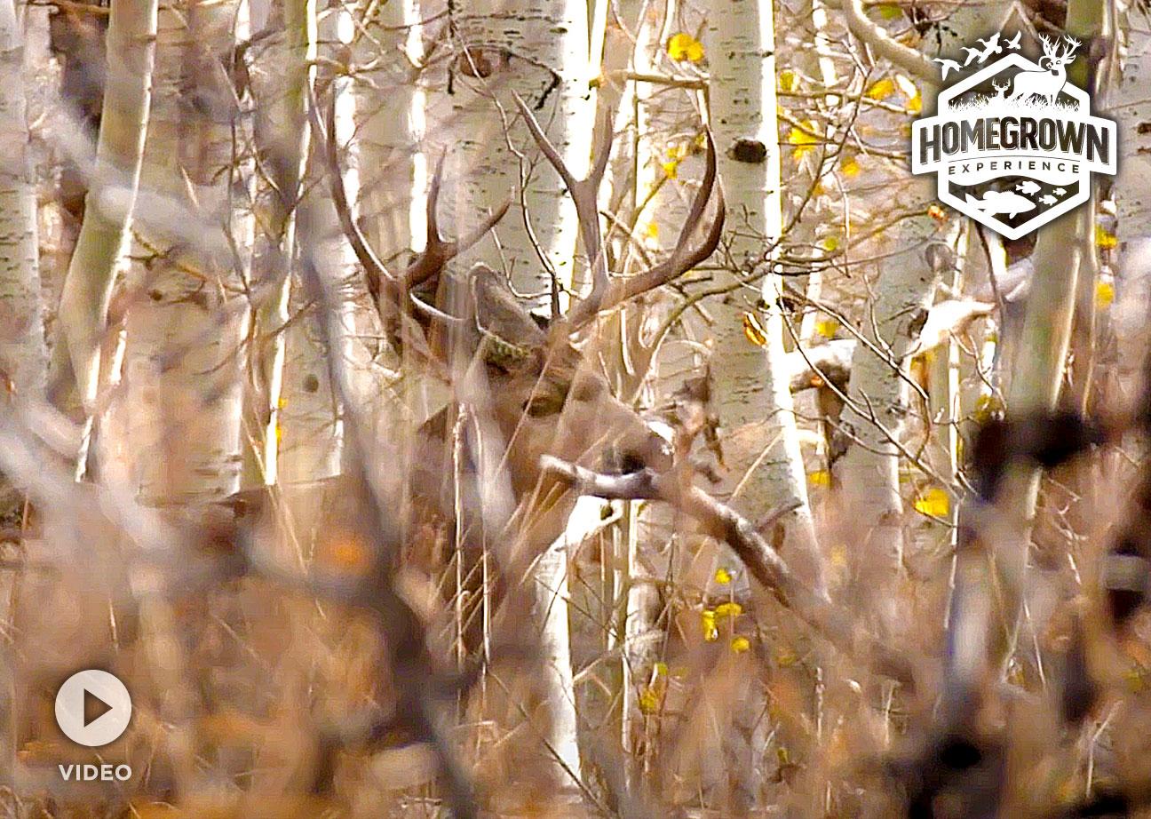 Read more about the article Chasing Monster Mule Deer in Utah